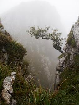 Árvore crescendo em uma rocha em uma paisagem montanhosa enevoada (astúrias, espanha)