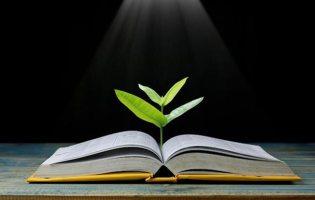 Árvore crescendo no livro como conhecimento e sabedoria