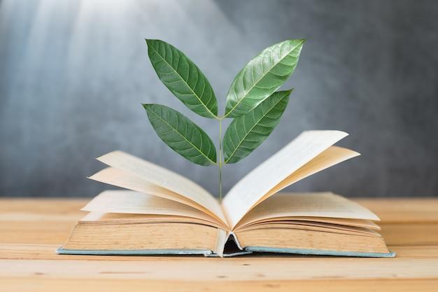 Árvore crescendo no livro na mesa com a luz solar