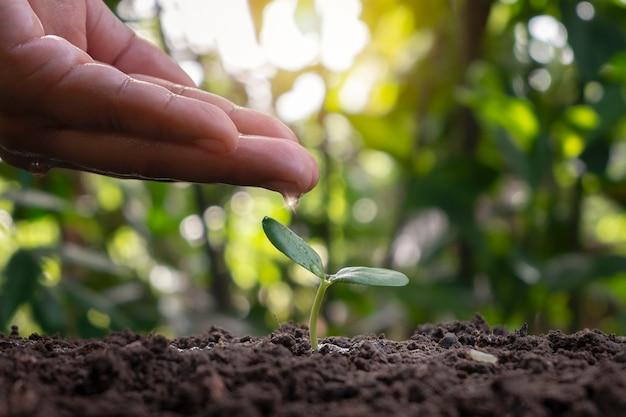 Árvore crescendo no solo e agricultores cuidando de árvores com plantas regando idéias de plantio