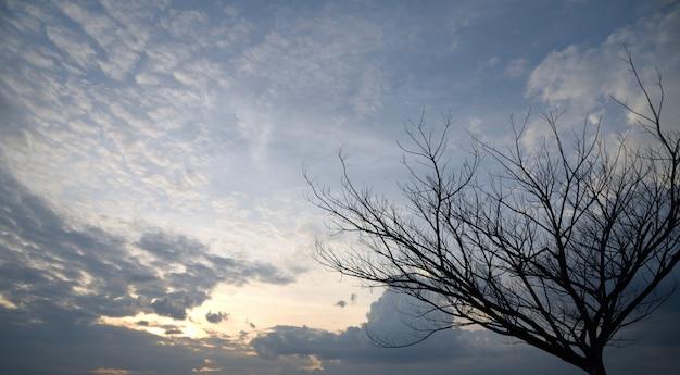 Árvore da morte no pôr do sol