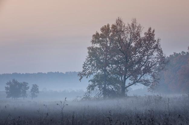 Árvore da paisagem no meio do nevoeiro