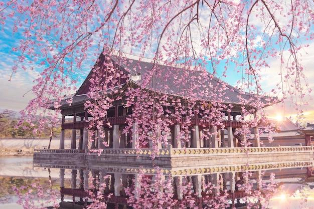 Árvore de cerejeira na primavera no palácio gyeongbokgung