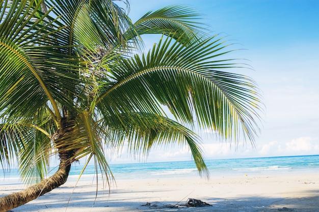 Árvore de coco nova na praia.