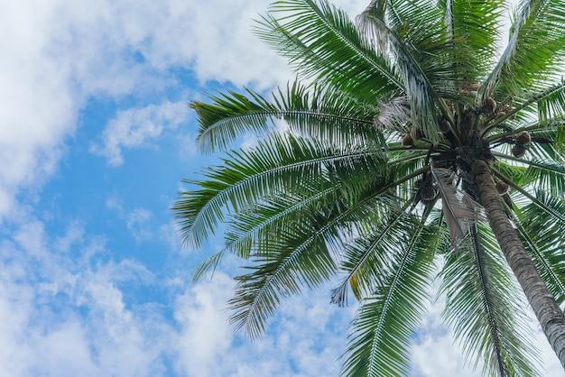 Árvore de cocos com céu azul. fundo de férias de verão