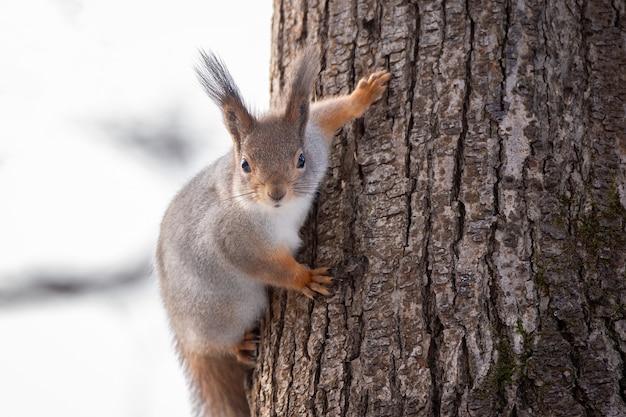 Árvore de esquilo no inverno