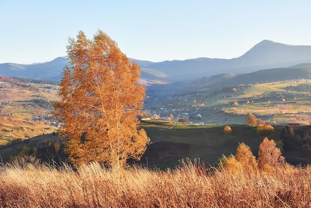 Árvore de faia brilhante na encosta de uma colina com vigas ensolaradas no vale da montanha.