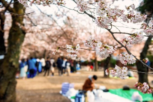 Árvore de flor de cerejeira no jardim primavera