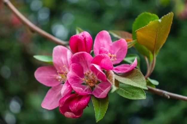 Árvore de flor sobre o fundo da natureza. flores da primavera. fundo da primavera