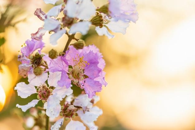 Árvore de flores da rainha