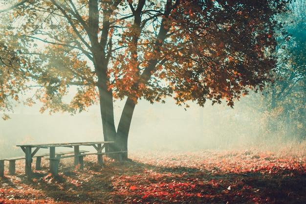 Árvore de folha caduca com folhas amarelas, banco de madeira velho na névoa da manhã de outono