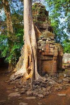 Árvore de gaint com raízes na antiga muralha de angkor wat, no camboja