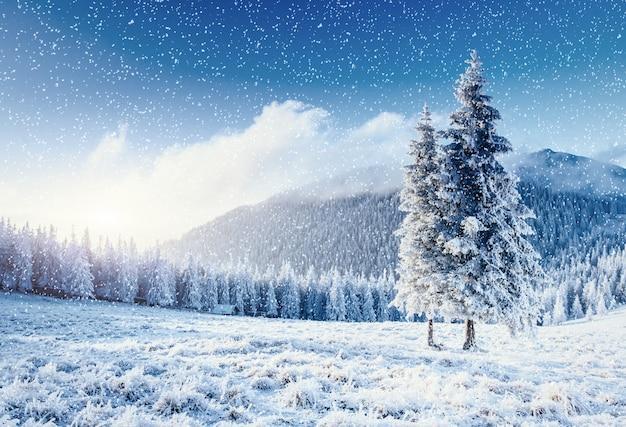 Árvore de inverno na neve. cárpatos, ucrânia, europa. bokeh light ef
