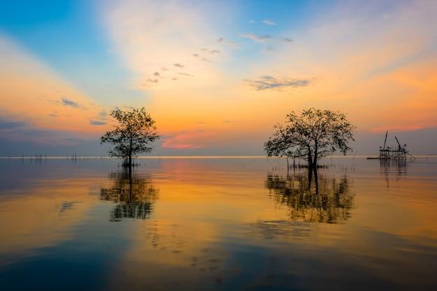 Árvore de mangue no mar no céu do nascer do sol