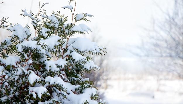 Árvore de natal coberta de neve em tempo ensolarado_