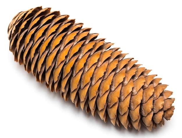 Árvore de natal de cones em close up de fundo branco