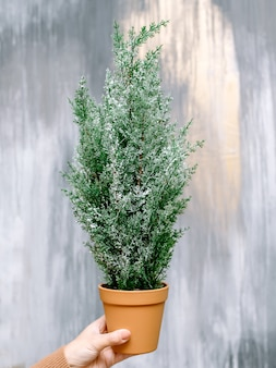 Árvore de natal, decorações de natal e decoração