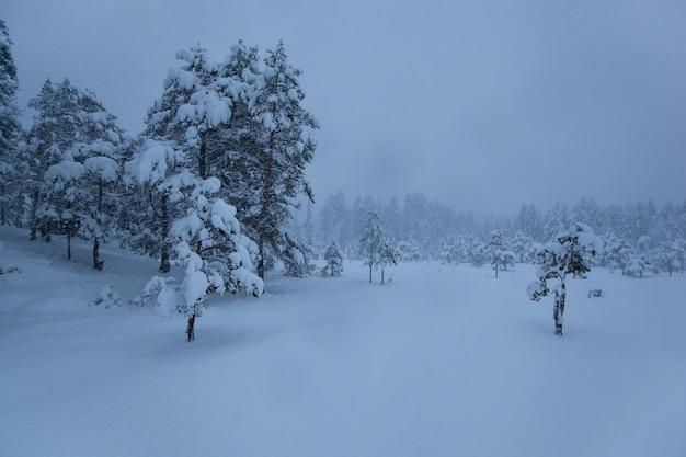 Árvore de neve do inverno tempestuoso paisagem