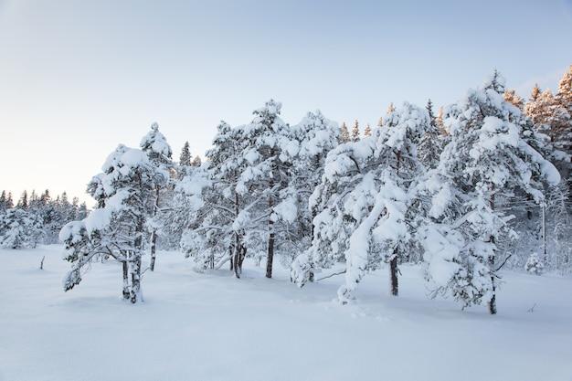 Árvore de neve linda paisagem de inverno