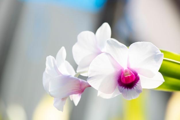 Árvore de orquídea branca em natural close-up
