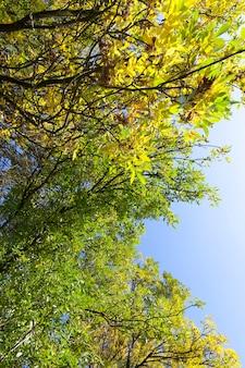 Árvore de outono com folhagem mudou de cor no outono