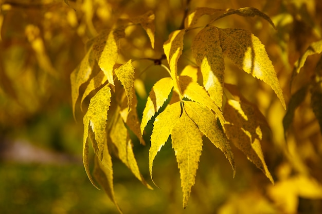 Árvore de outono com folhas amarelas e verdes contra o céu azul