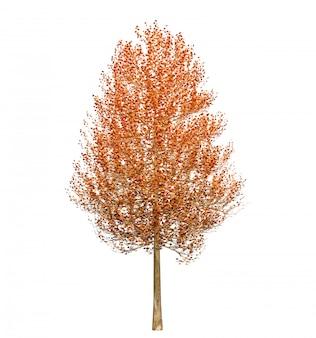 Árvore de outono com folhas isoladas no fundo branco. ilustração 3d
