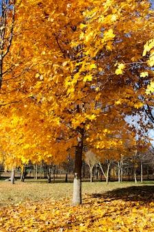 Árvore de outono na floresta