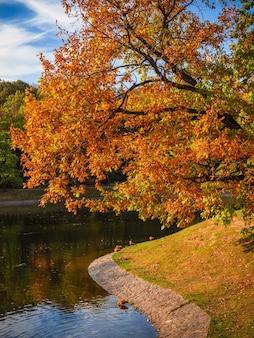 Árvore de outono na margem de curvas da lagoa. paisagem matinal de outono com árvore de bordo vermelho /