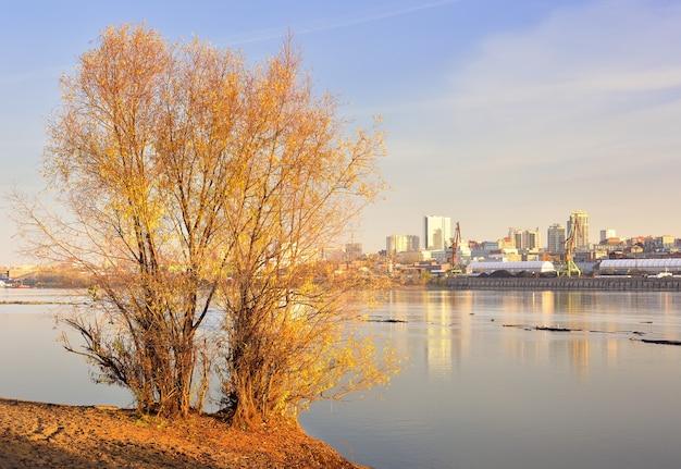 Árvore de outono na margem do rio ob, porto fluvial da capital da sibéria à distância