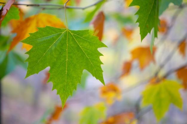 Árvore de outono outono folhas fundo