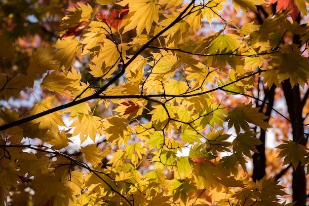 Árvore de outono