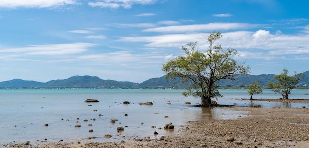Árvore de pé por uma praia ensolarada, oceano de água azul, céu azul e montanha verde.