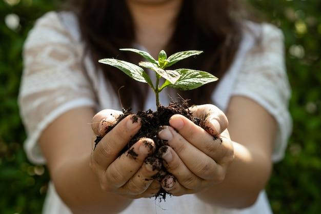 Árvore de planta jovem brotam na mão da mulher.