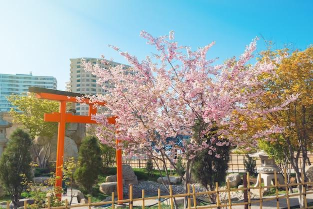 Árvore de sakura florescendo no parque da cidade