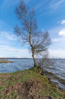 Árvore de vidoeiro na margem do lago com céu azul e águas agitadas. início da primavera na irlanda.