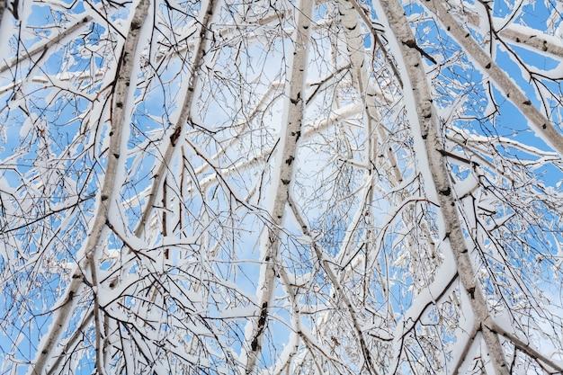 Árvore de vidoeiro na neve contra o céu azul. fechar-se