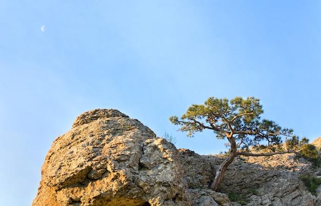 Árvore de zimbro na rocha no fundo do céu (reserva