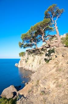 Árvore de zimbro na rocha (reserva