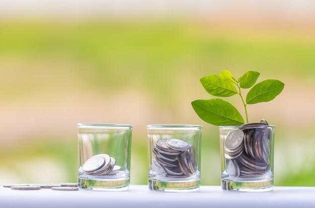 Árvore do dinheiro com moedas para expandir seus negócios