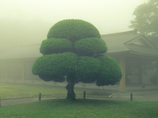 Árvore do parque japonês