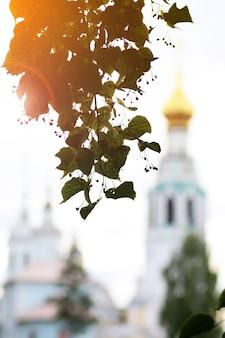 Árvore do pôr do sol da catedral da primavera