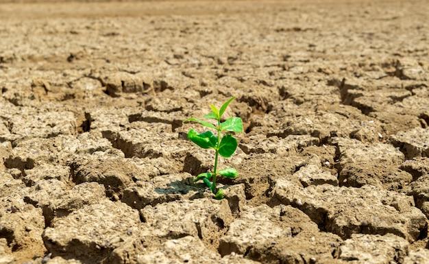 Árvore do solo seca com base na ecologia e no meio ambiente