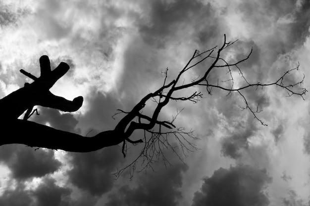 Árvore e céu preto e branco