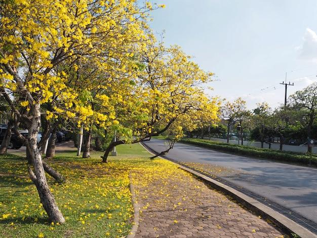 Árvore e flores no parque