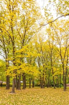 Árvore e folha amarela na histórica cidade de arrowtown