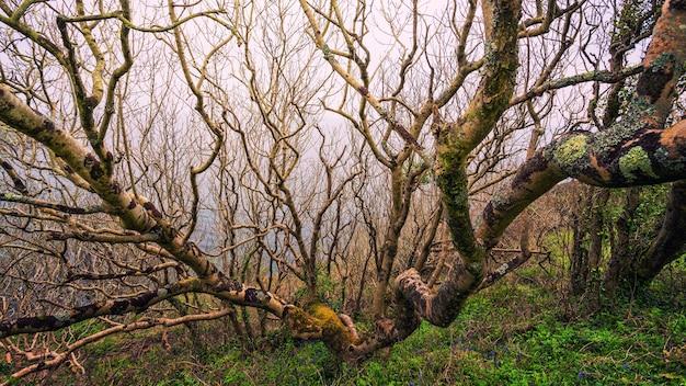 Árvore e galho