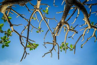 Árvore e galhos no fundo do céu azul