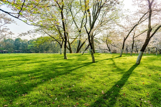 Árvore e gramados