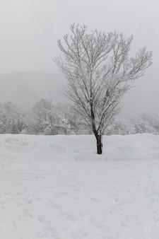 Árvore e neve shirakawa-vão localizam no japão